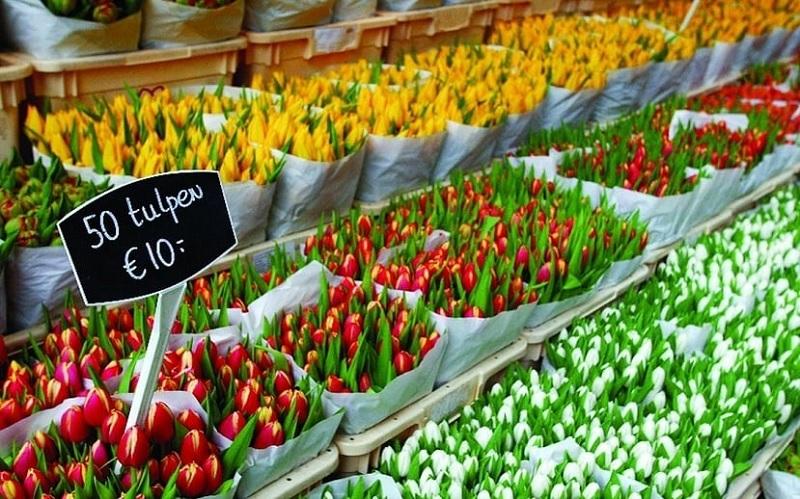 Tulipas no Mercado flutuante das flores em Amsterdã