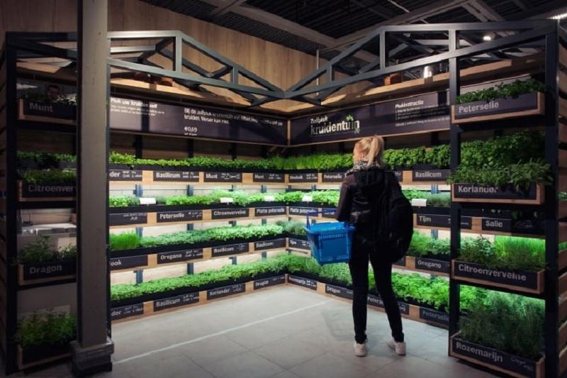 Produtos orgânicos no supermercado Albert Heijn em Amsterdã