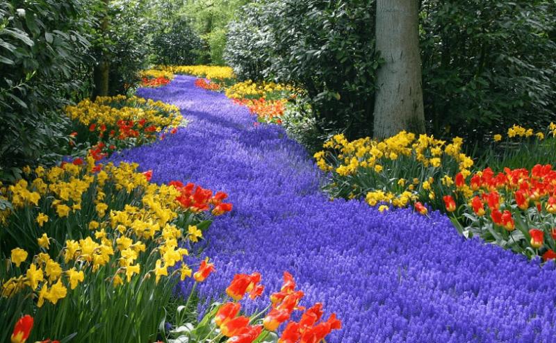 Flores em Amsterdã