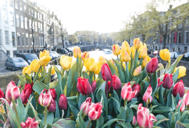 Primavera em Amsterdã