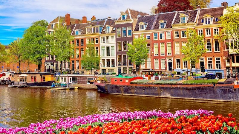 Flores na primavera em Amsterdã