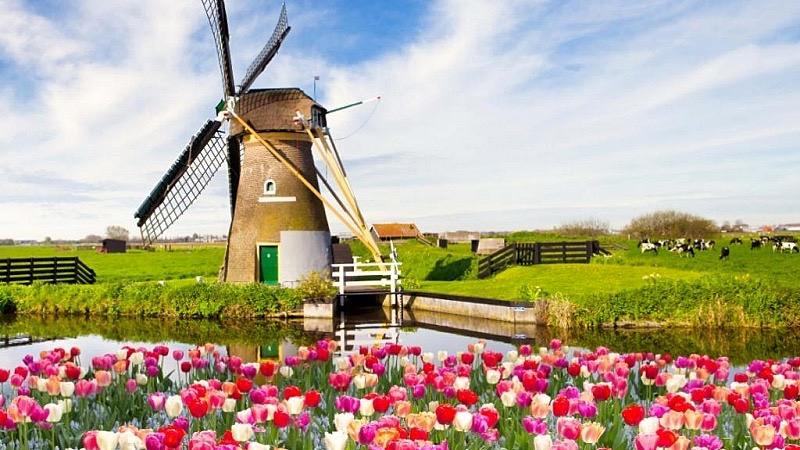 Moinho de vento e tulipas na Holanda