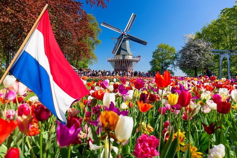 Tulipas em Amsterdã